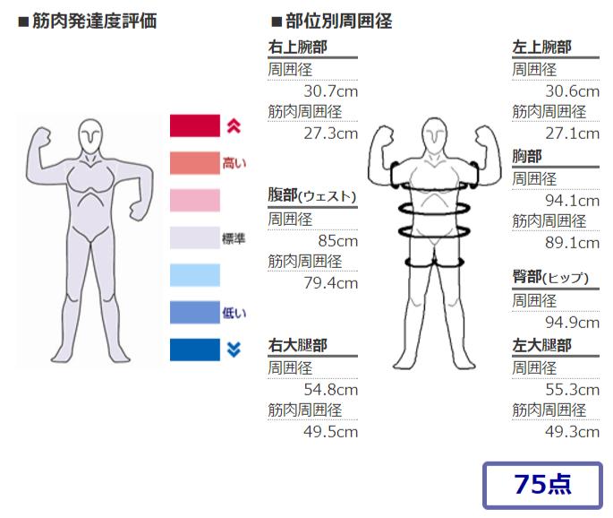 筋肉発達度調査2017年