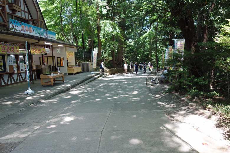 途中にタコ杉やサル園、薬王院などを通っていきます