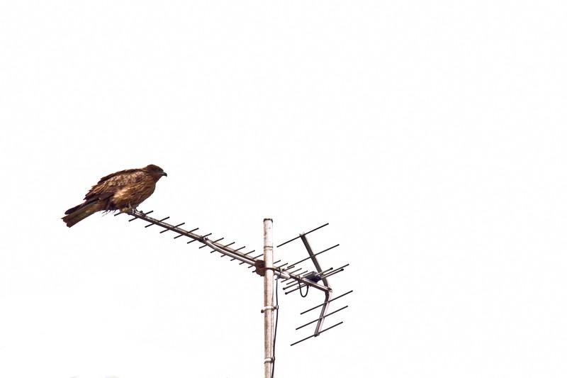JCOM(TVとネット)を解約して、アンテナ+光回線に切り替える計画①